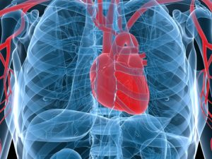 Elderly Care Grant Pass OR: Five Contributing Factors to Heart Disease